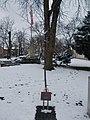 József Lövey memorial tree, Pestújhelyi Square, 2018 Pestújhely.jpg