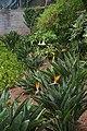 Jardim Botânico da Madeira DSC 0395 (14699806362).jpg