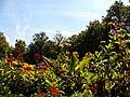 Jardin of Residenz, Würzburg, 22 Aug 2010 - panoramio - anagh (9).jpg