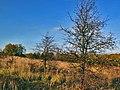 Jesenný motív II. - panoramio.jpg