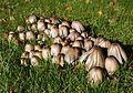 Jyväskylä - fungi 11.jpg