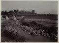 KITLV - 28942 - Kurkdjian, N.V. Photografisch Atelier - Soerabaja - Sugarcane transport by train - 1921.tif