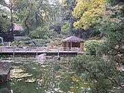Japanese Garden in the botanic gardens.