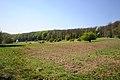 Kaltbruendlwiese Lainzer Tiergarten.jpg