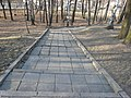 Kamionka, Mikołów, Poland - panoramio (19).jpg