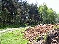 Kamionka, Mikołów, Poland - panoramio (4).jpg