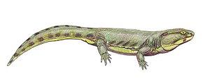 Karpinskiosaurus - Restoration of Karpinskiosaurus secundus