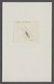 Kend - Print - Iconographia Zoologica - Special Collections University of Amsterdam - UBAINV0274 041 03 0032.tif