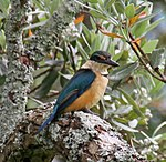 Kingfisher 2 (32058107715).jpg