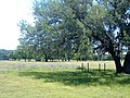 Kinney County, TX, USA - panoramio.jpg
