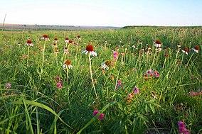 Kirwin Prairie Flowers (7468776398).jpg