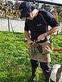 Kiwifruit vine grafting 12.jpg