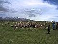 Korats Karer , Armenian Stonehenge (28937996325).jpg