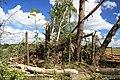 Krajobraz po wichurze. - panoramio (3).jpg