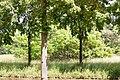 KulTour Parkanlage Sanssouci 3269.jpg