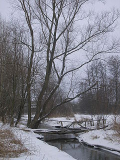 Kurówka river in Poland