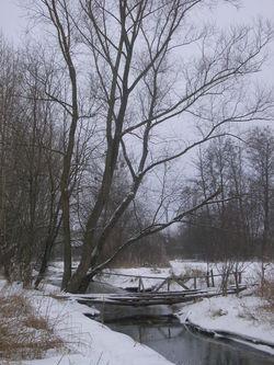 Kurówka River 04 Poland.JPG