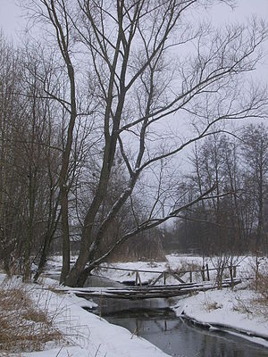Kurówka - Pedestrian bridge on Kurówka River