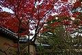 Kyoto 2008-11-20 (3104898685).jpg