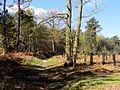 La Neuville-en-Hez (60), chemin forestier de Froidmont - GR 124 3.jpg