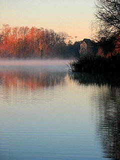 Lake Alice Fog.jpg