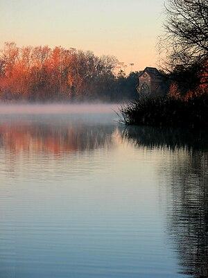 Lake Alice (Gainesville, Florida) - Image: Lake Alice Fog