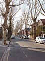 Leafless winter trees, Barrowgate Road, Chiswick - geograph.org.uk - 1188494.jpg