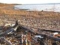 Lesser Slave Lake shoreline.JPG