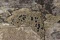 Lichen (29061598498).jpg