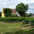 Liebfrauenwein - panoramio.jpg