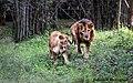 Lion Togetherness.jpg