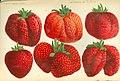 Lithografie van de aardbeienvariëteiten van Th. Mulié, Pieter Joseph de Pannemaeker, 1876, Centrum Agrarische Geschiedenis (CAG).jpg