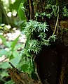 Little-plants-tree-ecuad0r-snd.JPG