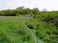 Little Haven Nature Reserve, checking mammal traps - geograph.org.uk - 1581830.jpg