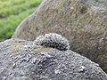 Little Moss - panoramio.jpg