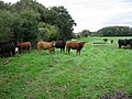 Livestock - geograph.org.uk - 255789.jpg