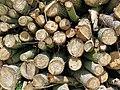 Log-pile wood-stack at Hatfield Broad Oak, Essex England 2.jpg