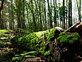 Log nest to the Teufelsbruch swamp.jpg