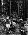 Log road with men, wagon and horses, ca 1925 (PICKETT 304).jpg