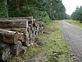 Logs beside the logging road - geograph.org.uk - 1470168.jpg