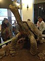 Lonesome George on display at the American Museum of Natural History.jpg