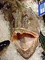 Lophius piscatoris . Peixe sapo.jpg
