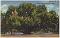 Lover's Oak, Brunswick, Georgia (8368110396).jpg