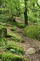 Lustleigh, path to Sharpitor - geograph.org.uk - 884371.jpg