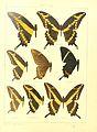 Macrolepidoptera15seit 0023.jpg