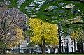 Madson Square Park - panoramio.jpg