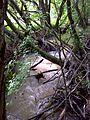 Malom-völgyi patak - panoramio.jpg