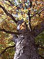 Mammoth Cave National Park OAKTREE.jpg