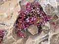 Marble niche, Jebel Ichkeul.JPG