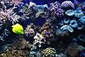 Marine fish (5791783978).jpg